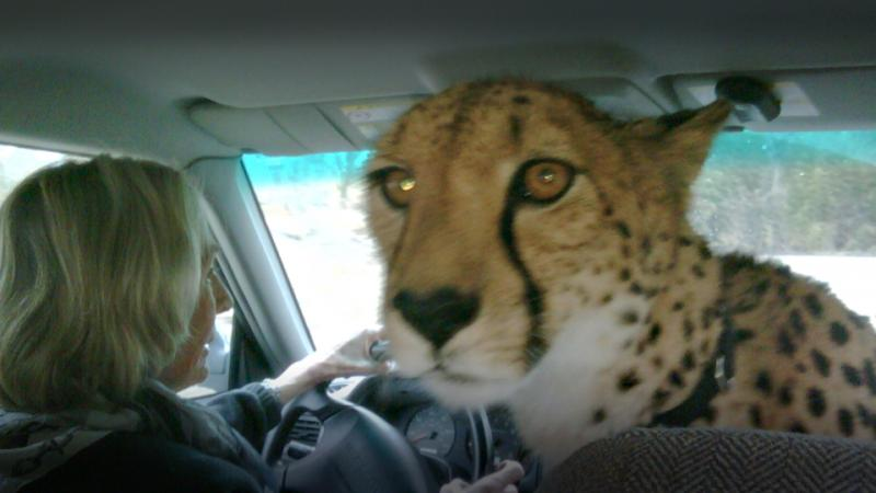 Jeremiah Johnson mug shot charged eavesdropping distracted driving cheetah law